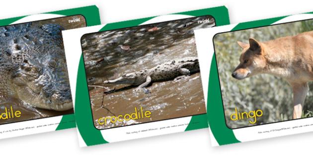 Australian Animal Display Photos - australian animals, animals