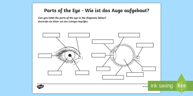 The Human Eye Labelling Activity English German Sight