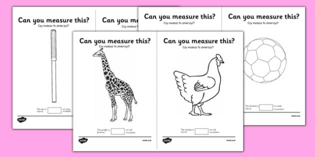 Measuring in cm Activity Sheets Polish Translation - centimetre, centimetres, measure, measurement, ssm, length, ruler, polish, poland, eal, maths, worksheet