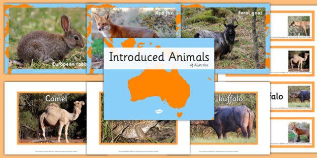 Introduced Animals in Australia pack - australia, animals, introduced, pack