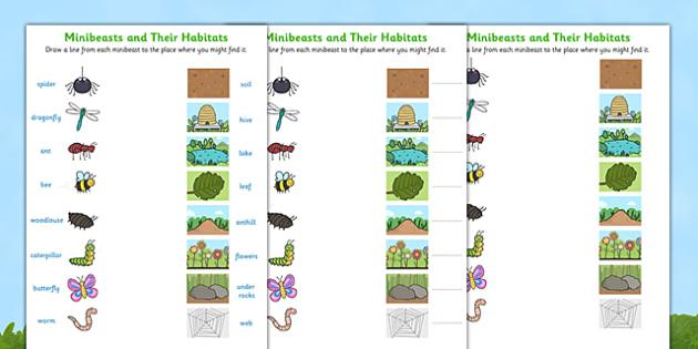 Minibeasts and their Habitats Worksheet - minibeast habitats worksheets, minibeast worksheet, minibeasts, habitats, where minibeasts live, work sheet