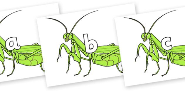 Phase 2 Phonemes on Praying Mantis - Phonemes, phoneme, Phase 2, Phase two, Foundation, Literacy, Letters and Sounds, DfES, display