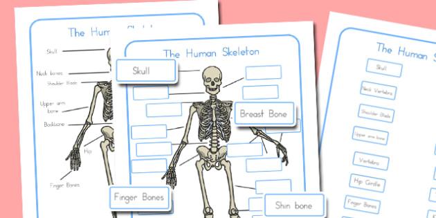 Human Skeleton Labelling Sheets - australia, human, skeleton