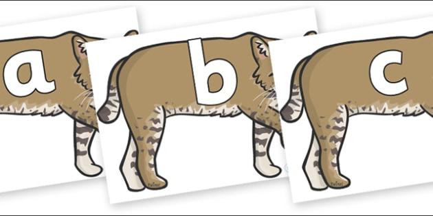 Phoneme Set on Bobcats - Phoneme set, phonemes, phoneme, Letters and Sounds, DfES, display, Phase 1, Phase 2, Phase 3, Phase 5, Foundation, Literacy