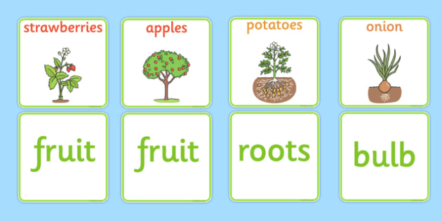 Fruit and Vegetable Plant Matching Cards - fruit and vegetable plants matching cards, fruit and vegetable, fruit, vegetable, matching cards, matchin, match, cards, flashcard, plants, apple, banana, pear, tomato, potatoe, carrot