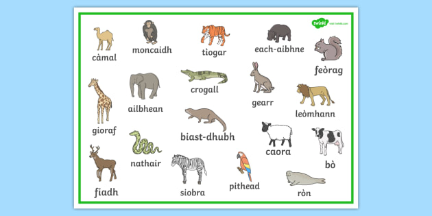 Scottish Gaelic Animal Word Mat Scottish Gaelic Animal Word