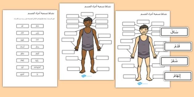 نشاط تسمية أجزاء الجسم - أجزاء الجسم، نشاط تعليمي، وسائل تعليمية