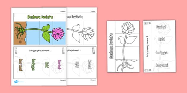 Składana interaktywna  pomoc edukacyjna Części rośliny po polsku
