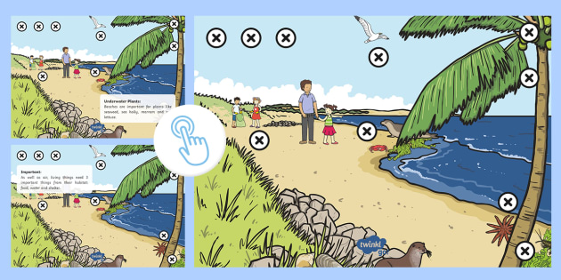 Beach Habitat Picture Hotspots - Interactive, Animal, Plant, Science, Facts, Information, Non-Fiction, Activity, Twinkl Go, twinkl go, TwinklGo, twinklgo