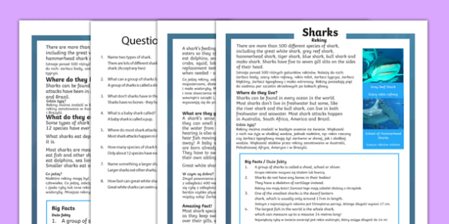 Sharks Differentiated Reading Comprehension Activity Polish Translation - Sharks, sea creatures, KS1 reading, non-fiction, information, comprehension, questions, fact file, polish, translation, literacy, mfl, eal