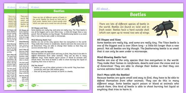 Beetles Differentiated Fact File - beetles, differentiated, fact file, facts, information