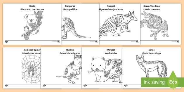 Top 25 Free Printable Wild Animals Coloring Pages Online | 315x630