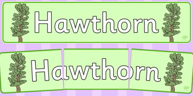 Hawthorn Display Banner - tree, hawthorn, display, banner, woods, header, forest