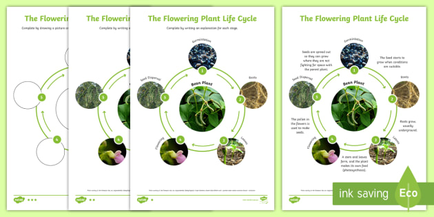 Flowering plant life cycle science animals ks2 seed flowering plant life cycle science animals ks2 seed flowers grow ccuart Images