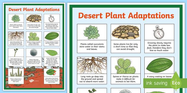 Desert Plant Adaptations Display Poster Desert Plants Plants Plants