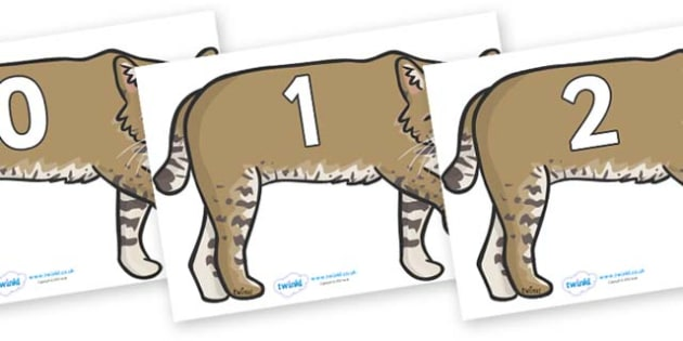 Numbers 0-31 on Bobcats - 0-31, foundation stage numeracy, Number recognition, Number flashcards, counting, number frieze, Display numbers, number posters