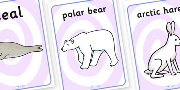 Polar Regions Display Posters - polar regions, display posters, posters, posters for display, classroom display, information posters, display