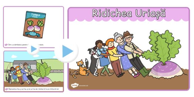 Ridichea uriasa, poveste, prezentare powerpoint, Romanian