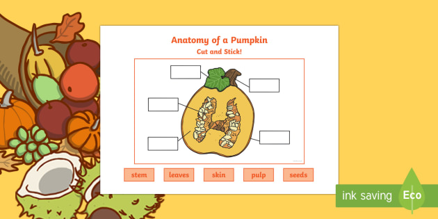 Anatomy of a Pumpkin Cut and Stick Worksheet / Activity Sheet
