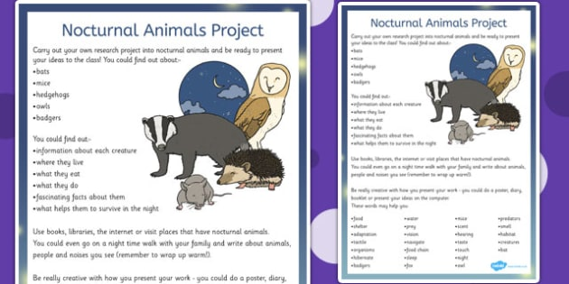 Animals Project - nocturnal, animals, project, animal