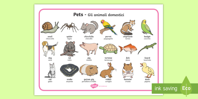 Italian English Animsld: Pets Word Mat English/Italian