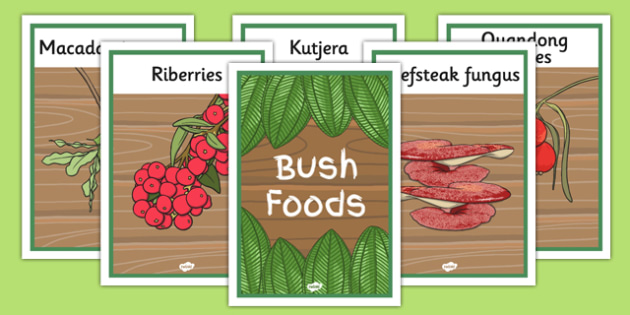 Bush Foods Display Posters - australia, bush food, display posters, display, posters, bush, food