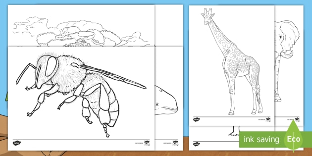 roi2 s 75 earth day 2019 endangered species colouring pages ver 1