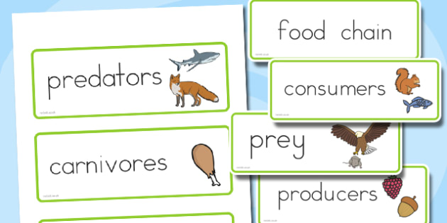 Food Chain Word Cards - australia, food chain, word cards, cards