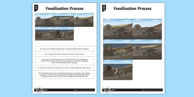 Fossilisation Process Worksheet / Activity Sheet - activity, fossilisation, process, worksheet