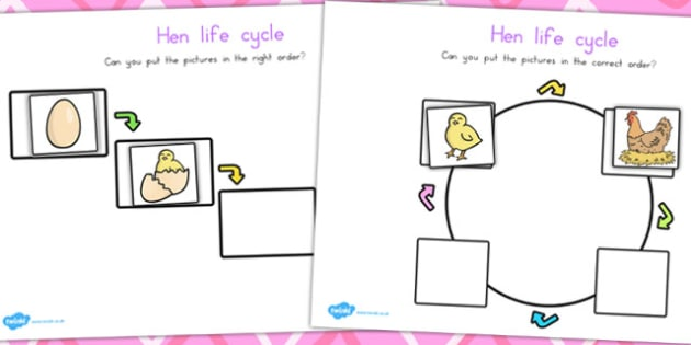 Hen Life Cycle Worksheets - life cycles, lifecycles, animals