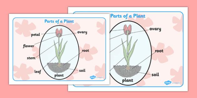Parts of a Plant Word Mat - parts of a plant, word mat, word, mat, parts, plant