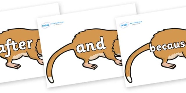 Connectives on Hamsters - Connectives, VCOP, connective resources, connectives display words, connective displays