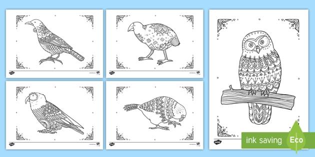 New Zealand Native Birds Mindfulness Colouring Pack