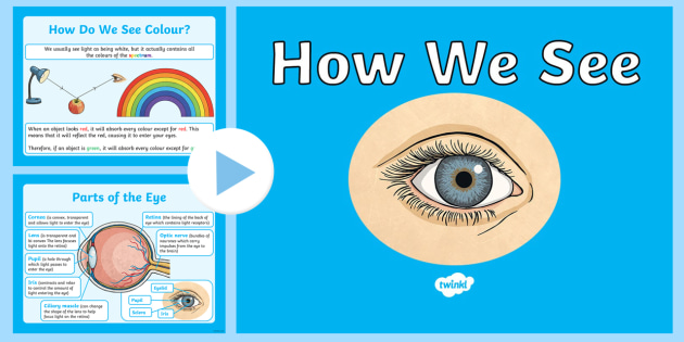 how we see powerpoint how we see how our eyes work how we