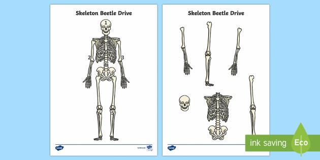 Skeleton Beetle Drive Game - Requests KS1, skeleton, bones, human body, skull, spine, ribs, game, dice