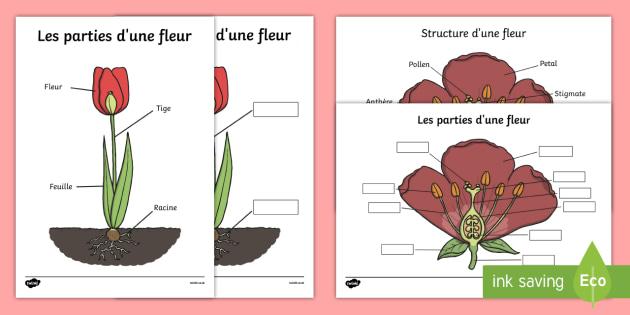 Schema A Completer Les Parties Et La Structure D Une Fleur Printemps