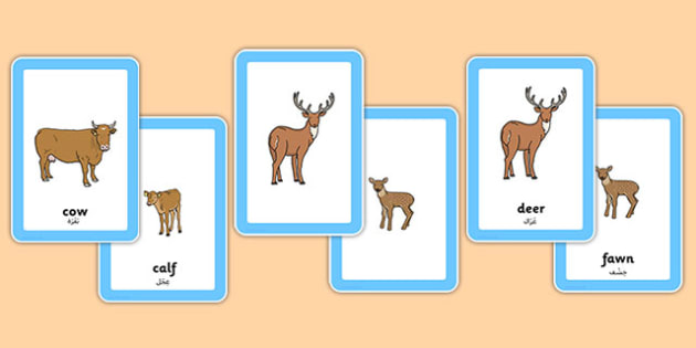 Animals And Their Young Matching Cards Arabic Translation - spring, science, living things, babies, growing, offspring, adults, grown-ups, biology, eal, bilingual