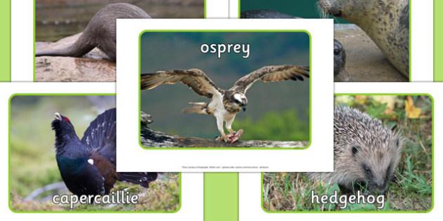 Scottish Wildlife Photo Pack - scottish, wildlife, photo pack, photo, pack