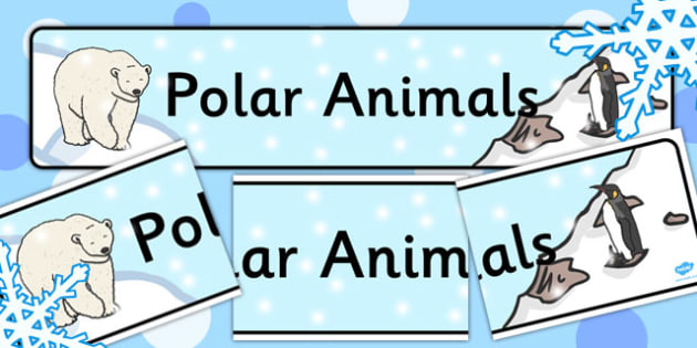 Polar Animals Display Banner - banners, displays, poster, animal
