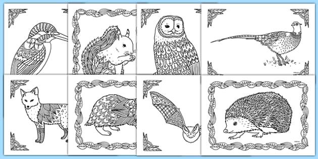 British Wildlife Mindfulness Colouring Sheets - british wildlife, mindfulness, colouring, colour, british, wildlife