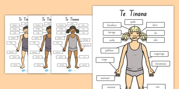 Parts of the Body A4 Te Reo Maori - nz, new zealand, literacy, writing, words, colouring, body, me, myself, science, ourselves, words