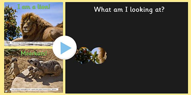 Safari Animals 'Whats behind the Binoculars?' PowerPoint Game - safari, safari powerpoint, safari animals guessing game, safari binoculars guessing game