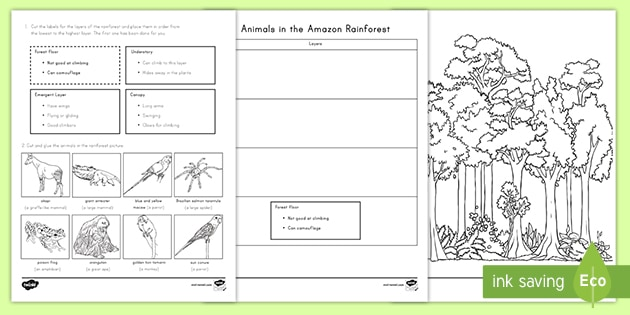 Animals In The Amazon Rainforest Cut And Paste Activity