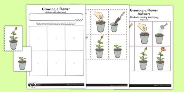 Worksheet / Activity Sheet Growing a Flower Polish Translation - polish, worksheet / activity sheet, growing, flower, worksheet