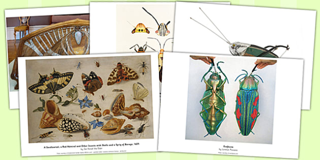 Insect Art Photopack - insect, art, photopack, photos, pack