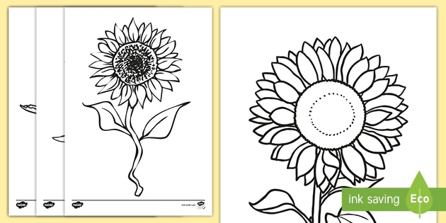 Sunflower Colouring Pages Teacher Made