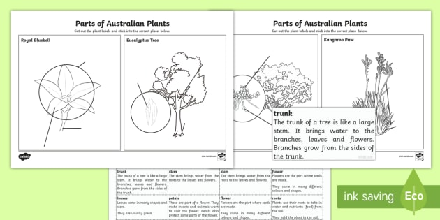 The Parts of Australian Plants Worksheet / Activity Sheet - Australian Curriculum Biological sciences, plant parts, Australian plants, Australian plant parts, p