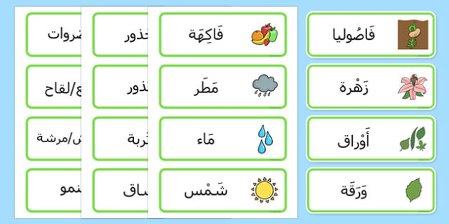 بطاقات مفردات نمو النباتات - النباتات، وسائل تعليمية، موارد، عربي