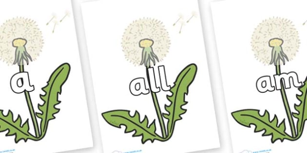 Foundation Stage 2 Keywords on Dandelion Seeds - FS2, CLL, keywords, Communication language and literacy,  Display, Key words, high frequency words, foundation stage literacy, DfES Letters and Sounds, Letters and Sounds, spelling