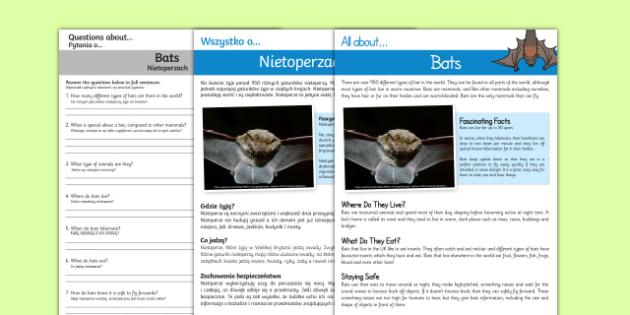 Bats Reading Comprehension English/Polish